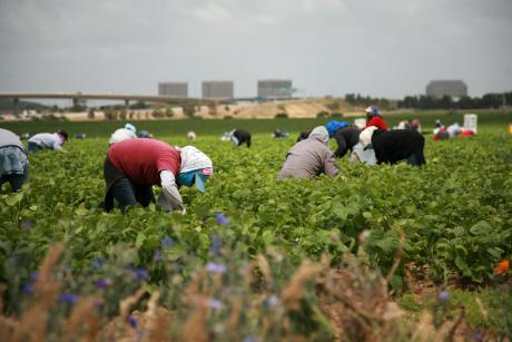Image of U.S. Farms and the Dwindling Labor Supply from Mexico